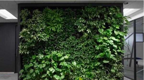植物墙搭配技巧