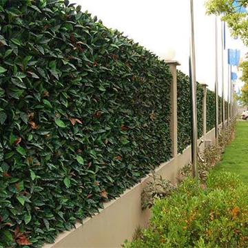 小区围栏植物墙