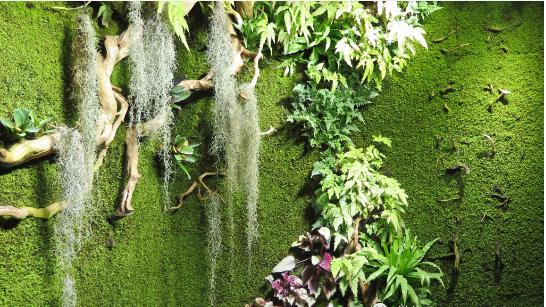 苔藓植物墙分类