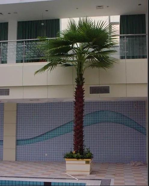 仿真棕榈树如何安装