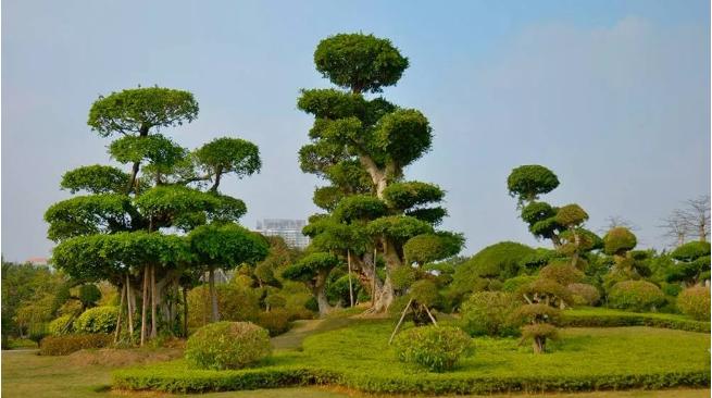 仿真景观树怎么养护