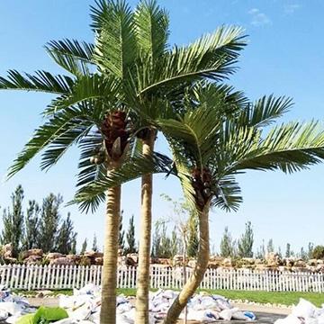 室外公共场所仿真棕榈树