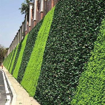 市政景观植物墙