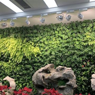 银行室内仿真植物墙