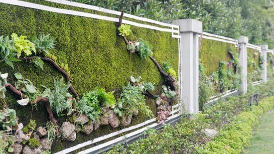 苔藓植物墙怎么样?