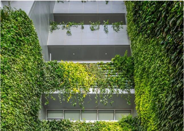绿植墙植物选择和搭配