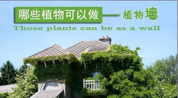 哪些植物适合做植物墙