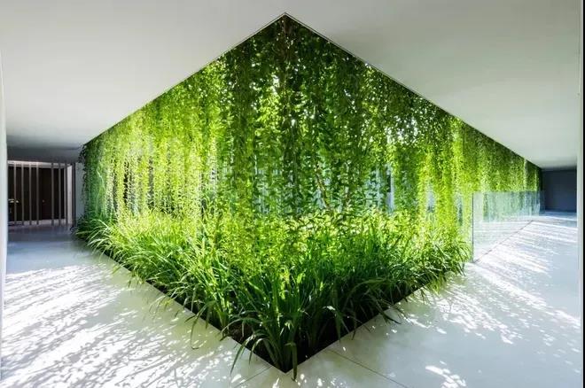 垂直绿化植物墙哪家好?