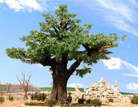 仿真树的种类和社会意义