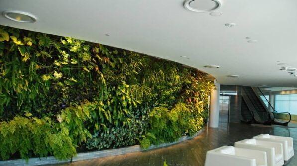 植物墙的种类及优缺点