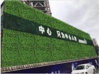 植物墙和垂直绿化的关系
