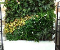 冬季室外植物墙怎么养护