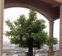 玻璃钢仿真树和水泥仿真树的区别