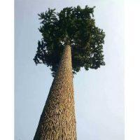 仿真树干的制作材质